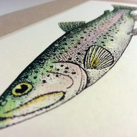 Rainbow Trout Illustration