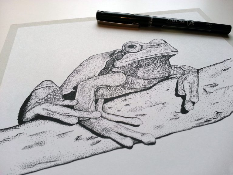 Pine Barrens Tree Frog Illustration